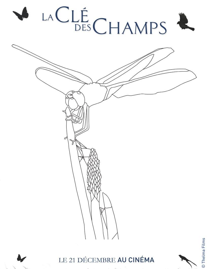 dessin de la libellule