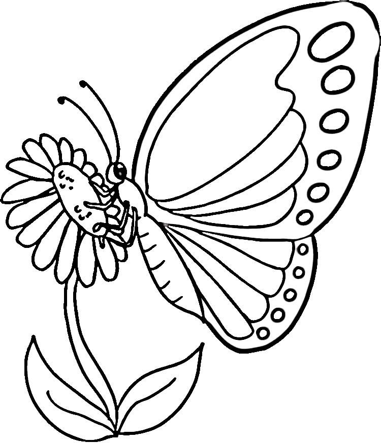 dessin à colorier libellule à imprimer