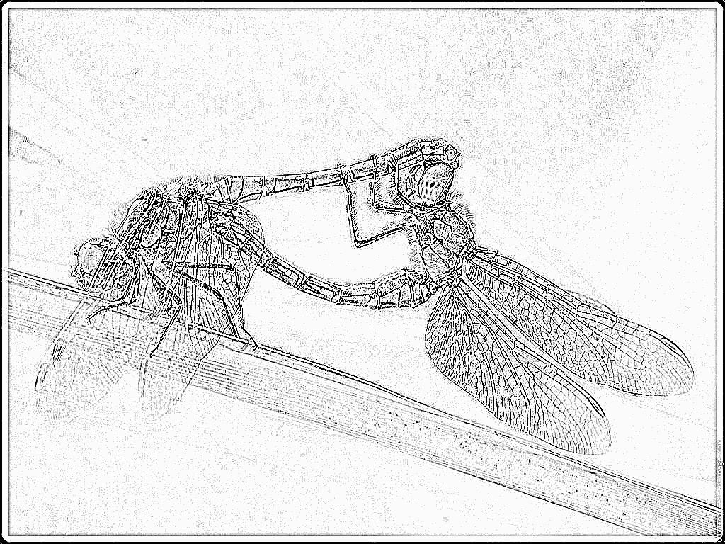 dessin à colorier à imprimer libellule