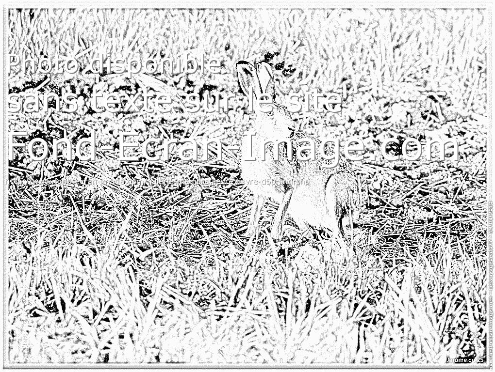 coloriage à dessiner lièvre a imprimer