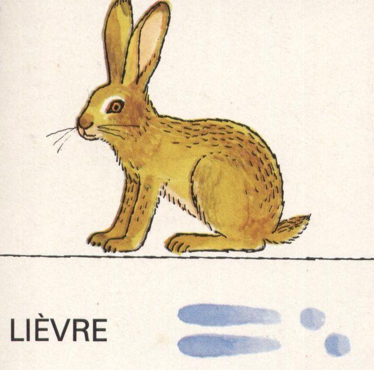 dessin à colorier de lièvre