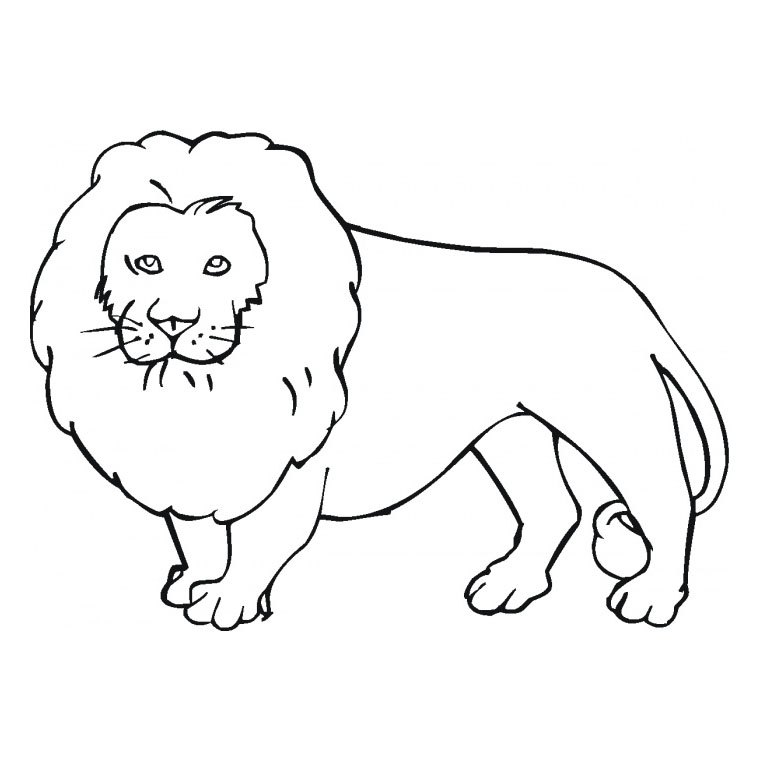 Dessin le lion et le moucheron - Coloriages lion ...