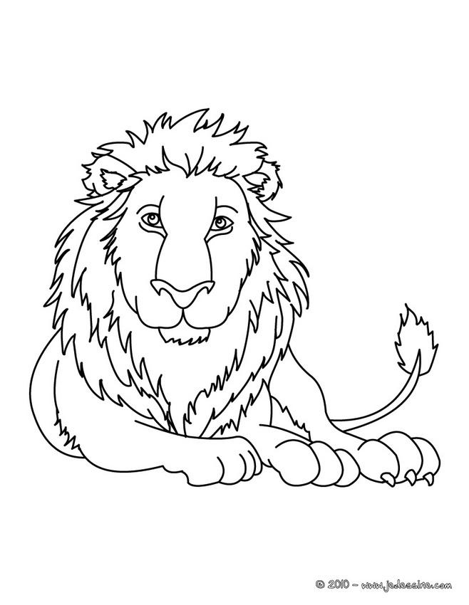 coloriage à dessiner de lion blanc