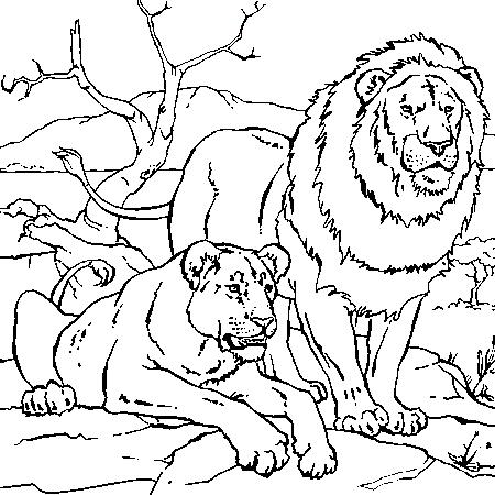 coloriage le lion et le moucheron. Black Bedroom Furniture Sets. Home Design Ideas