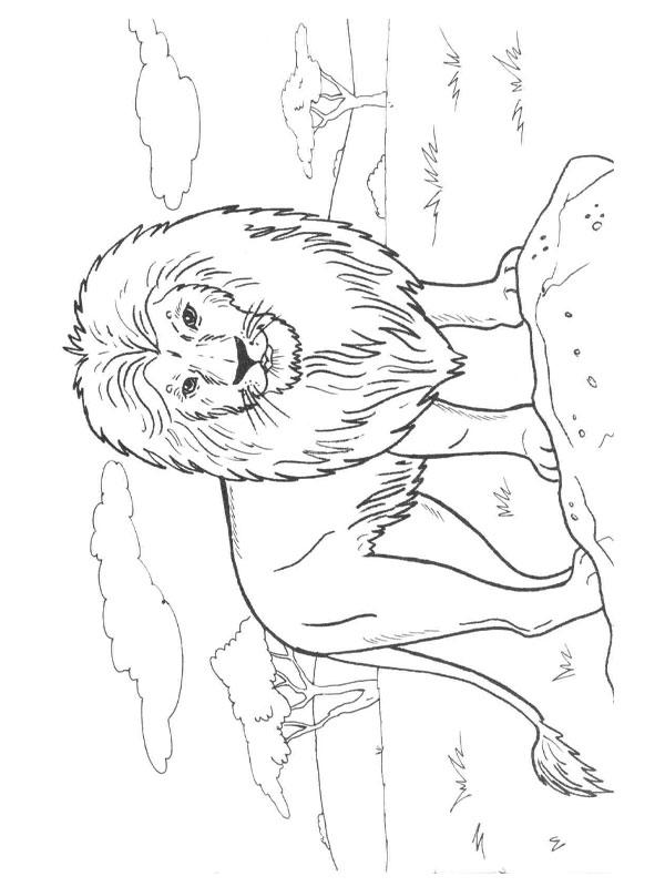 coloriage � dessiner roi lion gratuit � imprimer