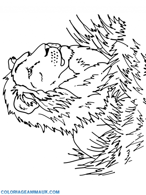 Coloriage lion dans la savane - Coloriages lion ...
