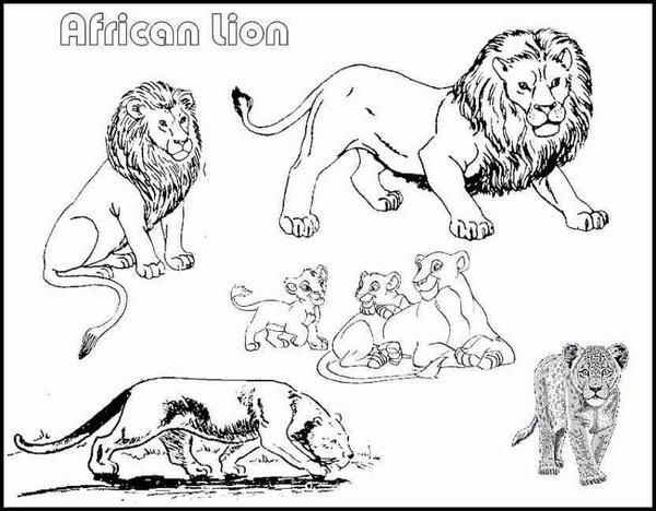 Coloriage lion gratuit - Coloriages lion ...