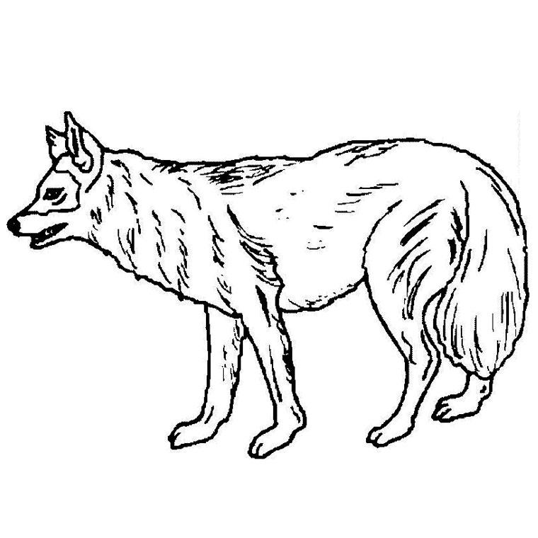 20 dessins de coloriage loup imprimer gratuit imprimer - Modele de loup a imprimer ...