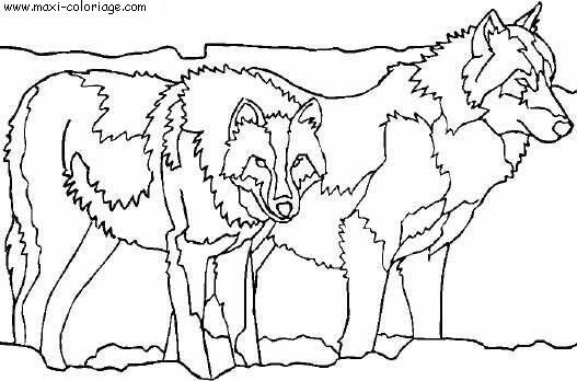 Coloriage A Imprimer Loup Auberge