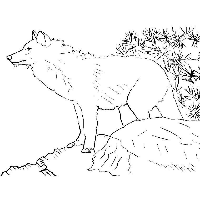 Coloriage Loup A Imprimer Gratuit Colorier Les Enfants