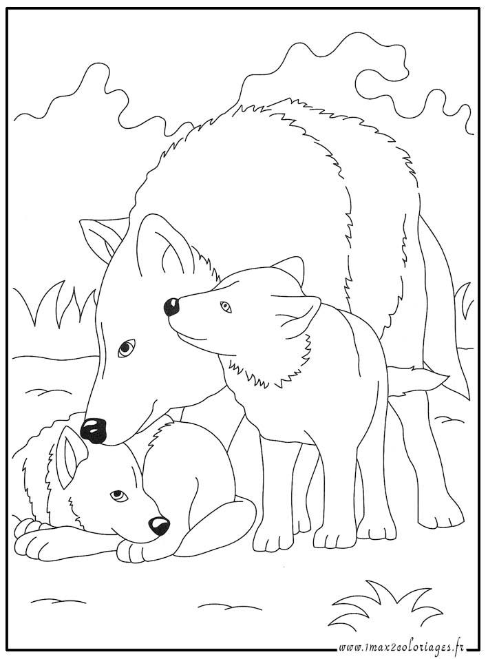 Coloriage dessiner un loup - Image loup dessin ...