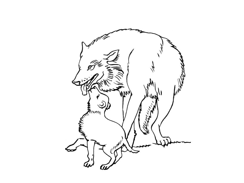 coloriage sur les loups
