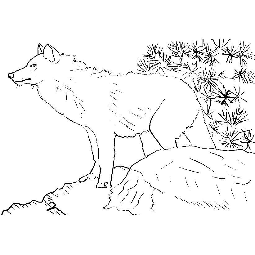 dessin à colorier loup qui souffle