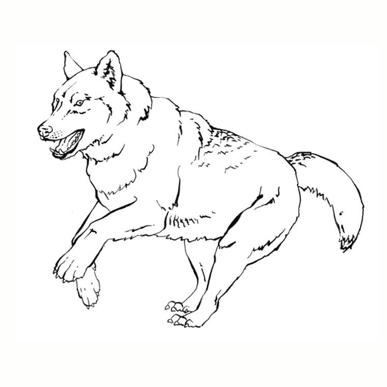 coloriage à dessiner magique loup ms