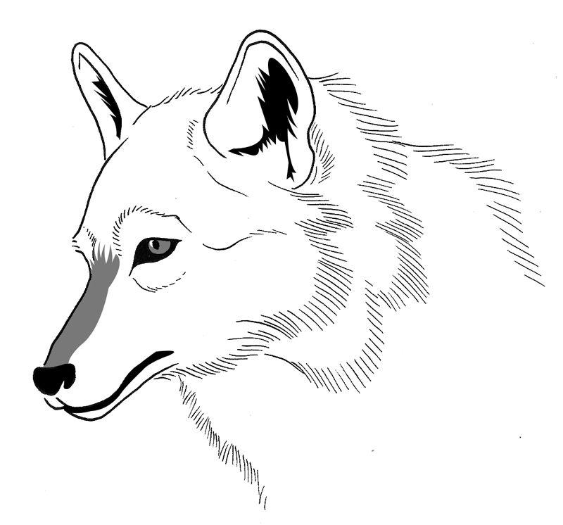 dessin à colorier loup méchant