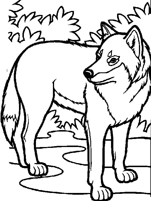 dessin à colorier loup auzou