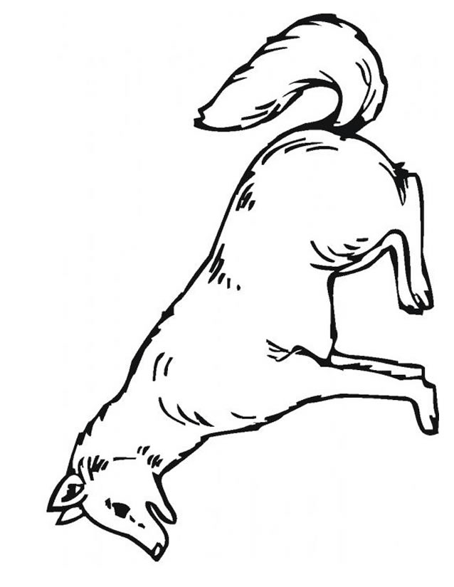 imprimer coloriage loup