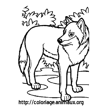 vrac dessin loup