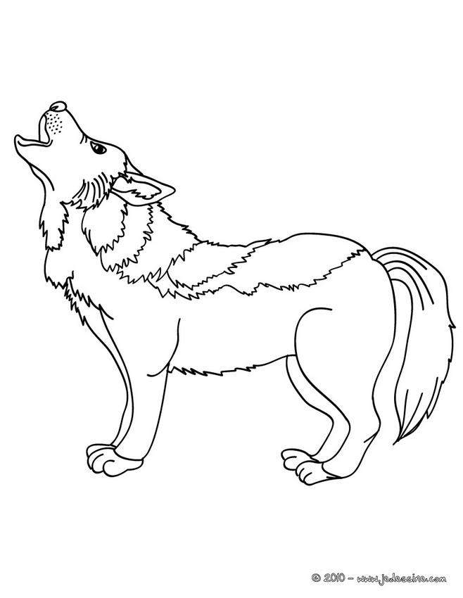 Dessin mini loup gratuit - Coloriage magique loup ...