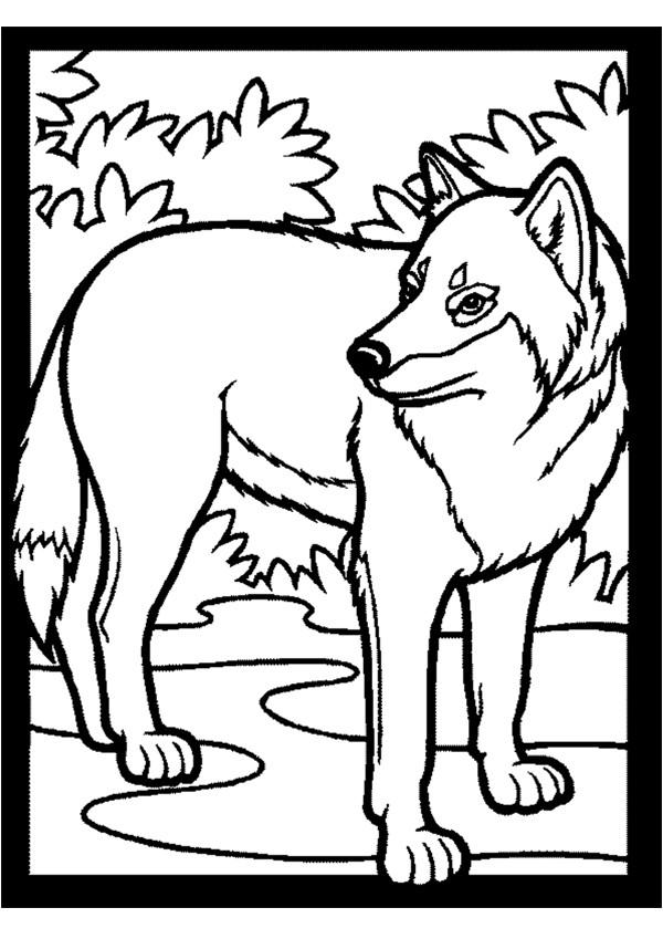 coloriage à dessiner du loup qui voulait changer de couleur