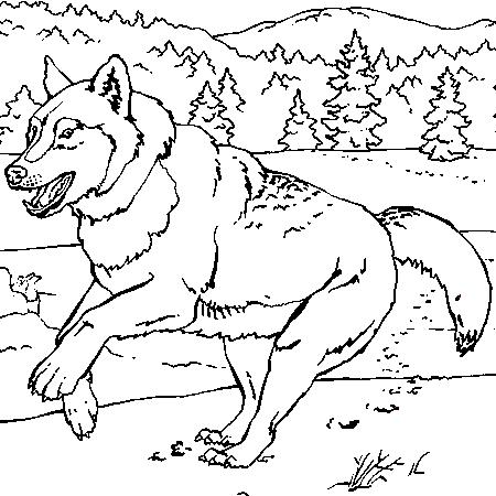 dessin loup et chevreaux