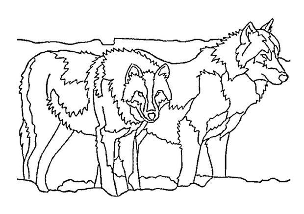 Dessin colorier loup m chant - Image loup dessin ...