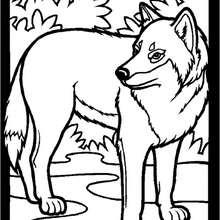 coloriage un loup dans le potager