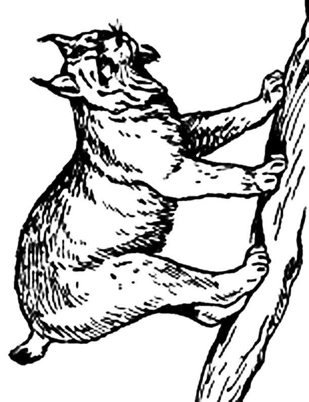 coloriage mandala lynx