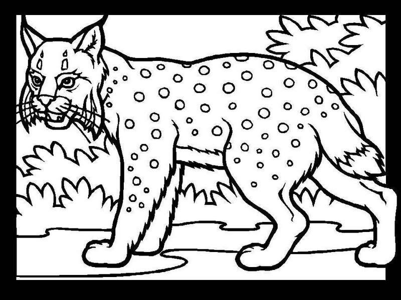 coloriage lynx imprimer