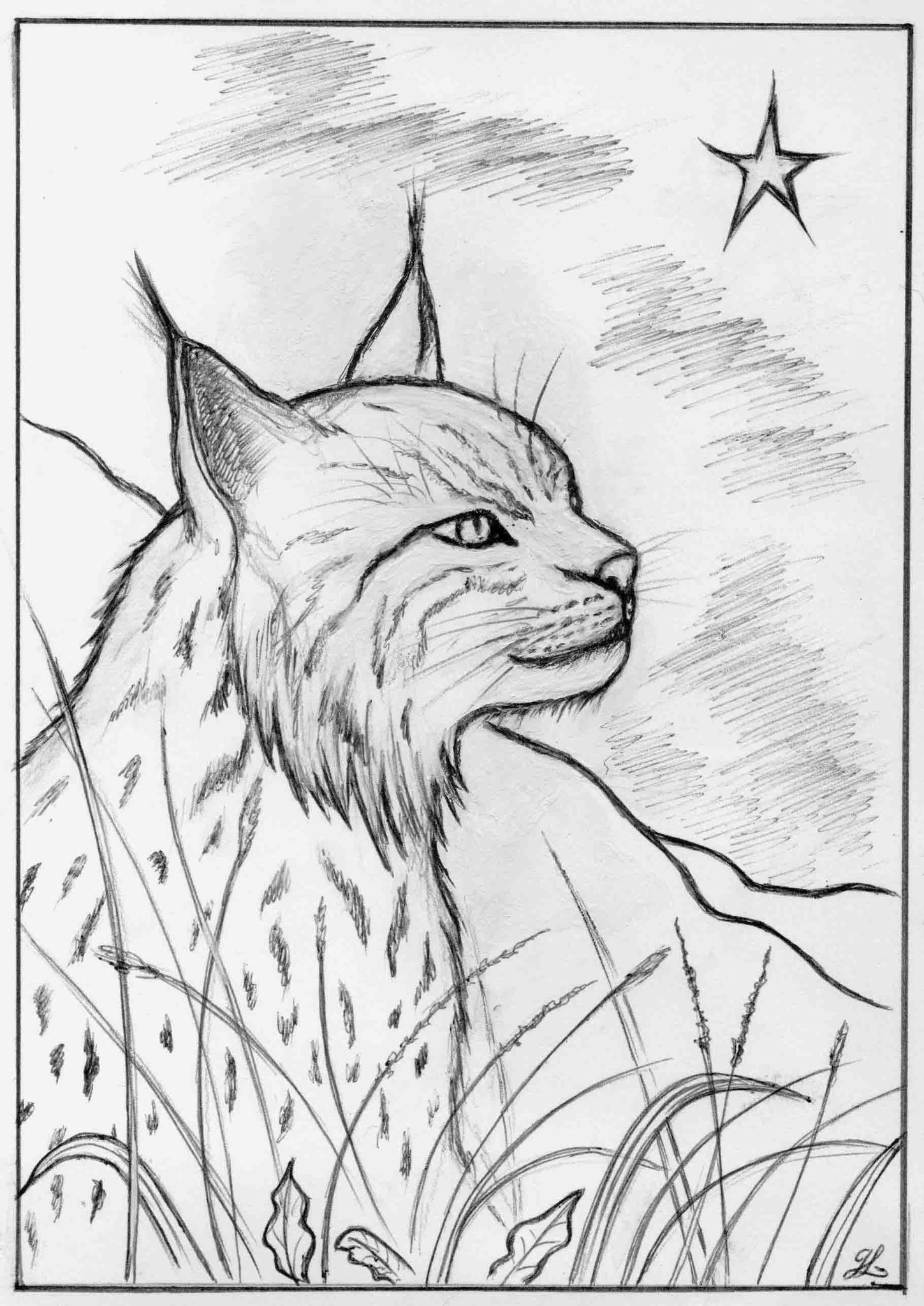 Dessin de lynx a imprimer - Coloriage art ...