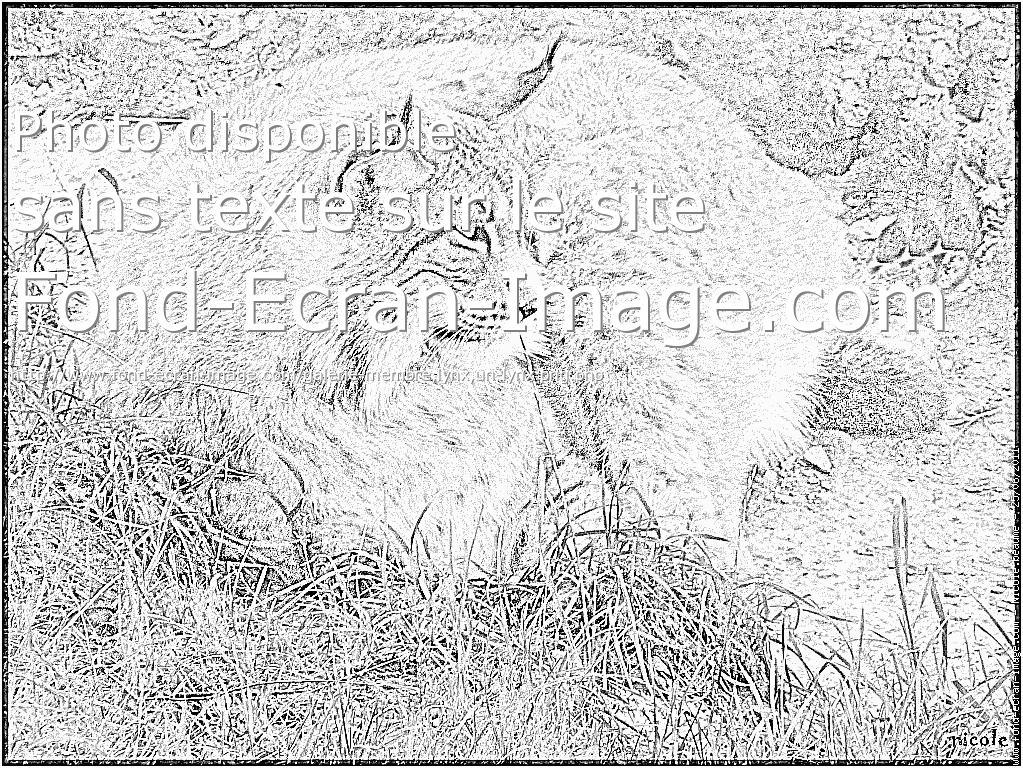 coloriage à dessiner de lynx a imprimer