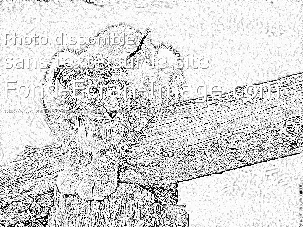 coloriage � dessiner lynx