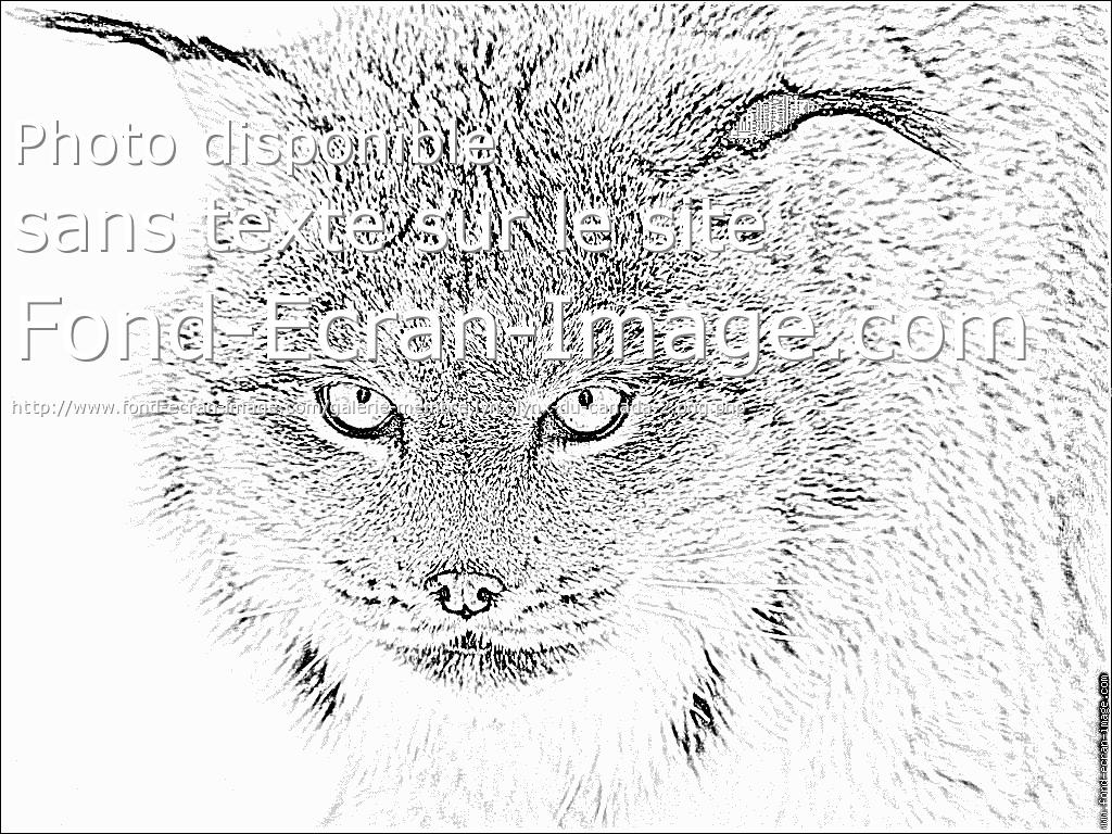 coloriage � dessiner lynx imprimer