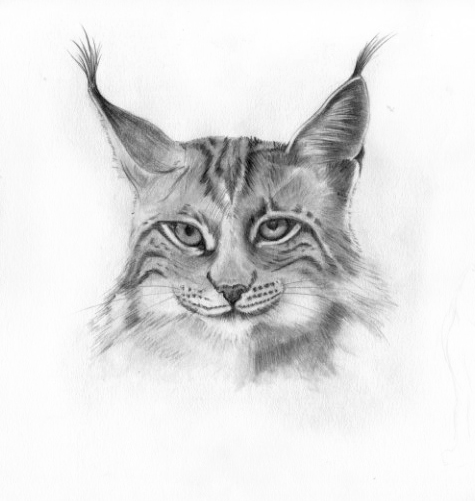 coloriage � dessiner mandala lynx
