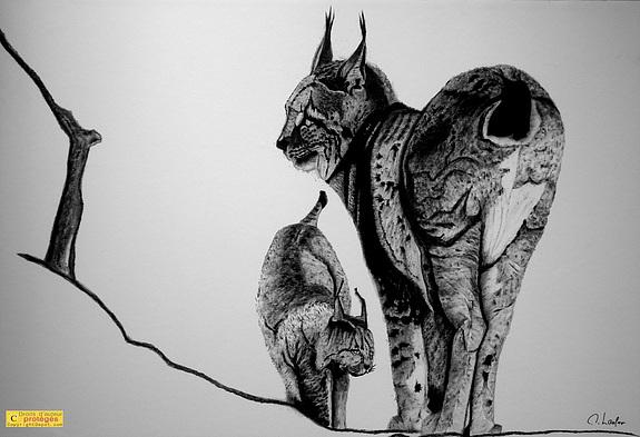 dessin de lynx a imprimer