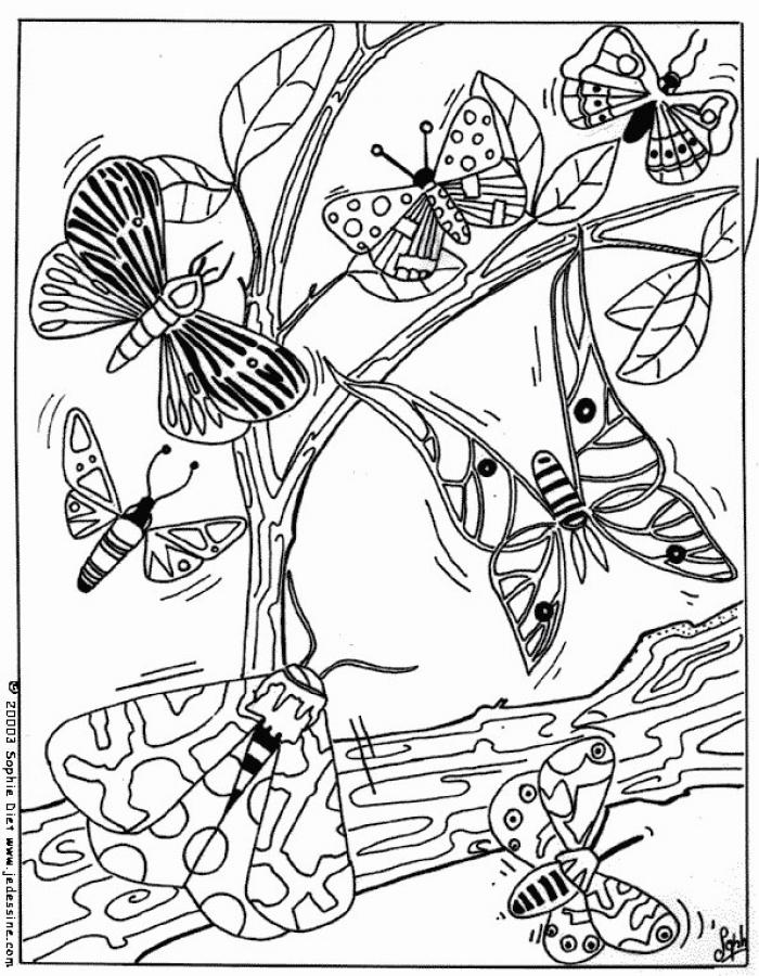 dessin � colorier magique papillon grande section