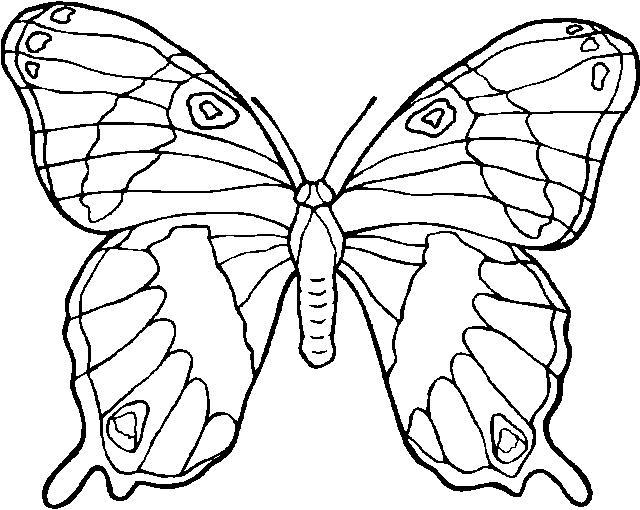 coloriage à dessiner magique papillon gs
