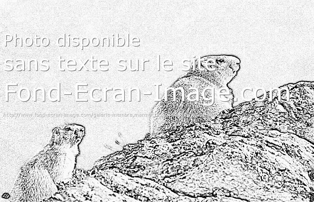 coloriage marmotte montagne