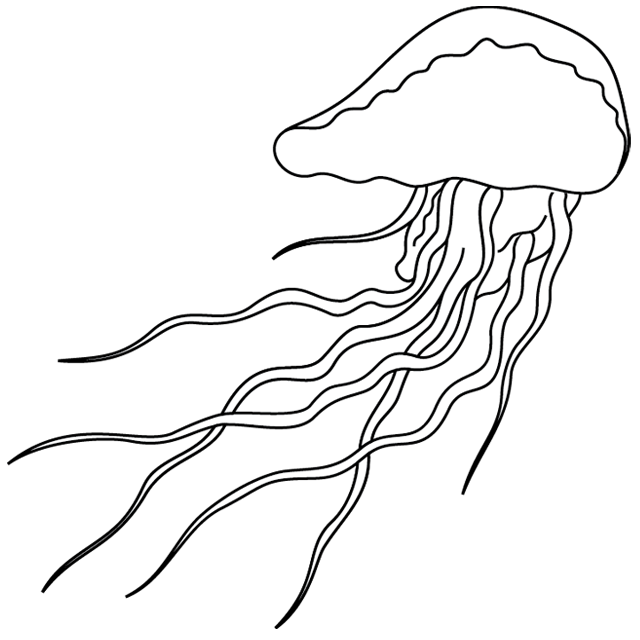 dessin meduse imprimer