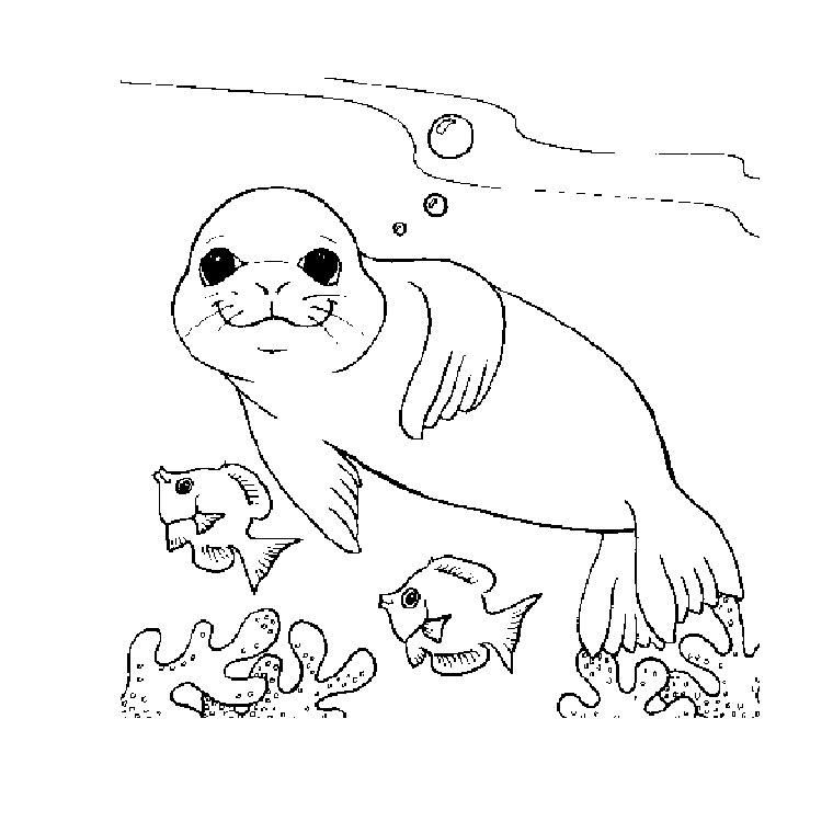dessin etoile de mer a imprimer