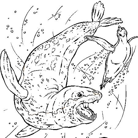 Coloriage dessiner vagues mer - Image leopard a imprimer ...