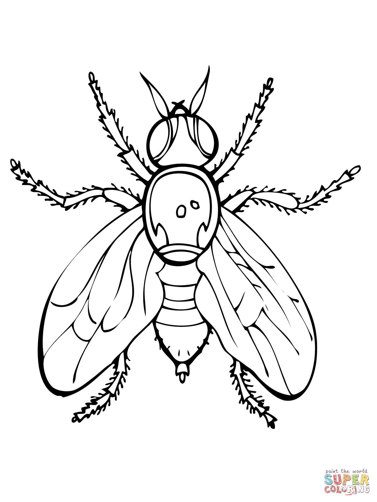 Coloriage dessiner de mouche - Dessin de mouche ...