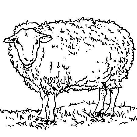 20 dessins de coloriage mouton aid imprimer - Dessiner un faucon ...