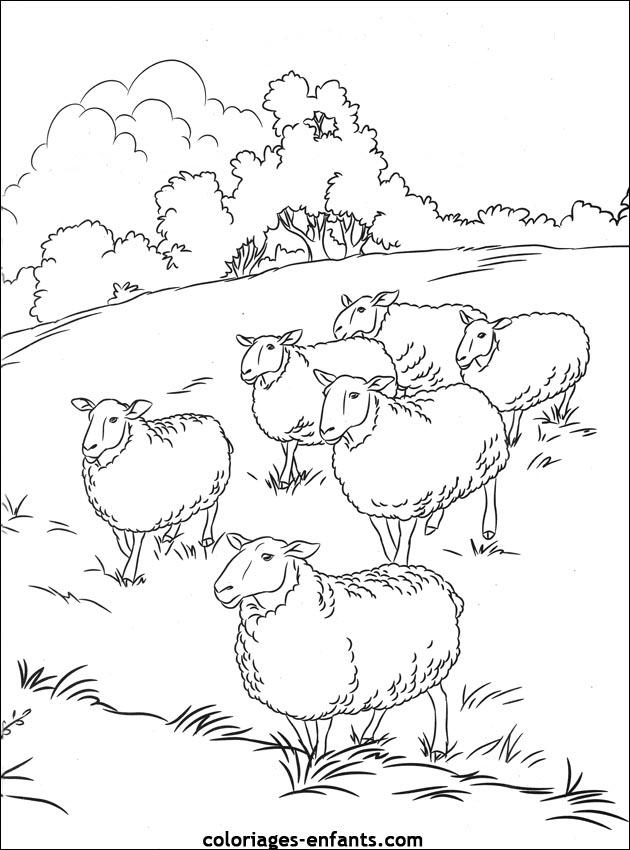 Colorier des moutons - Mouton en dessin ...
