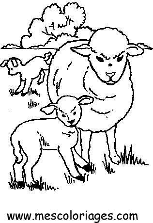 Dessin mouton et agneau - Brebis dessin ...