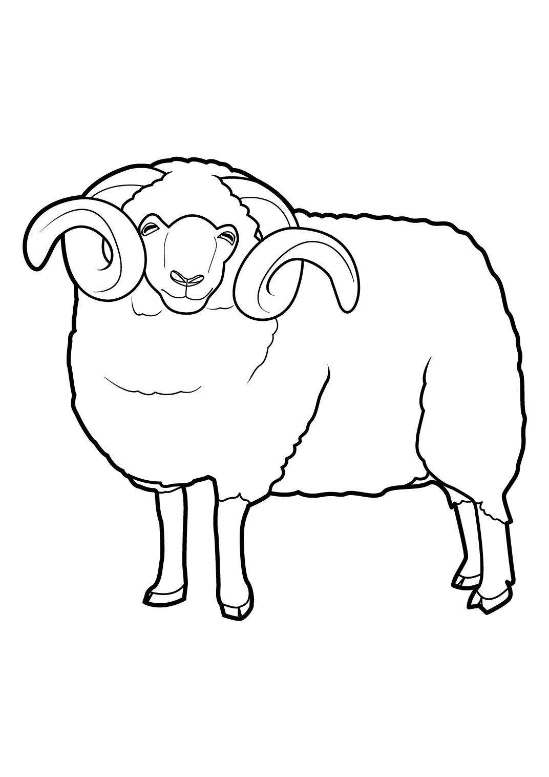 dessin à colorier troupeau de mouton