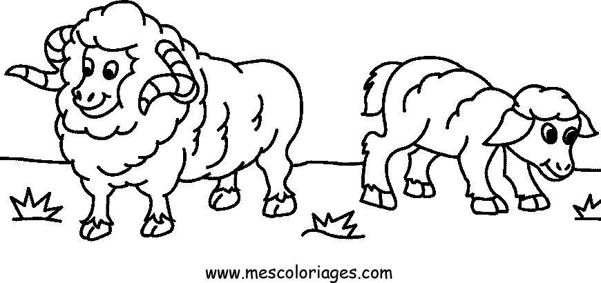 Coloriage dessiner mouton aid - Mouton a dessiner ...