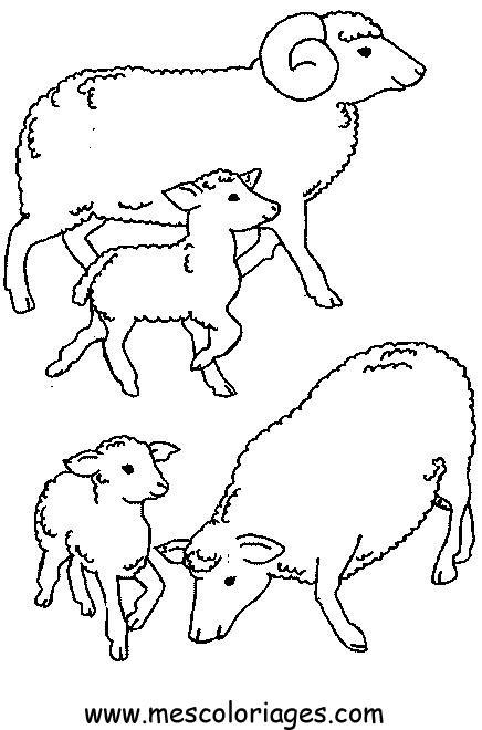 mouton en dessin à colorier
