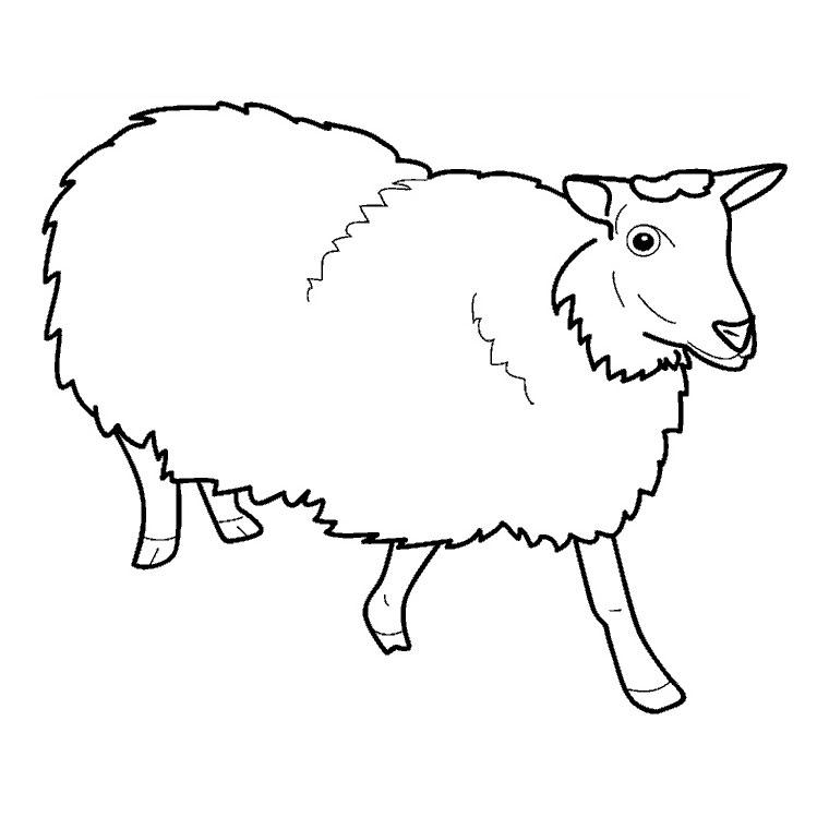 coloriage à dessiner bebe mouton