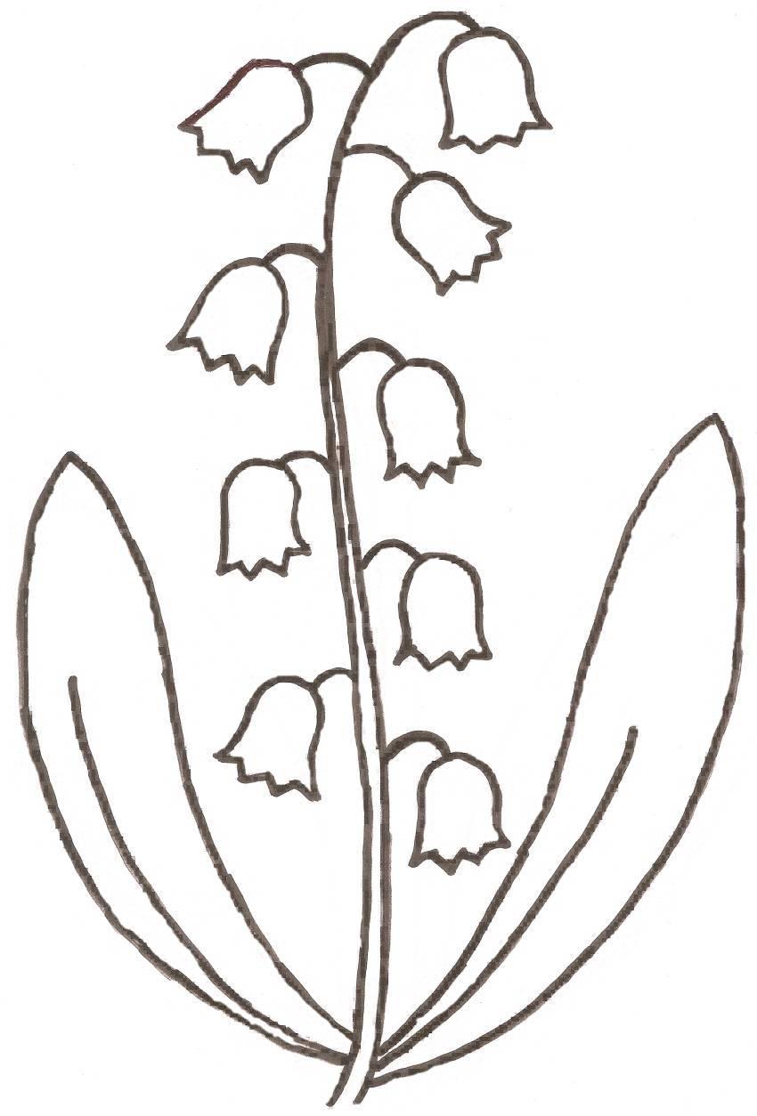 Coloriage fleur muguet - Coloriage muguet ...